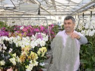 Orchideen & Schnittstauden Leukers in Kerken -